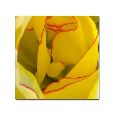 Trademark Fine Art Kurt Shaffer 'Inside a Beautiful Tulip' 18