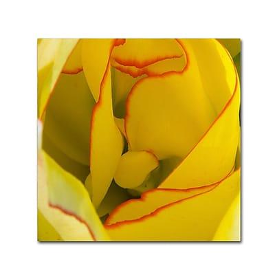 Trademark Fine Art Kurt Shaffer 'Inside a Beautiful Tulip' 18