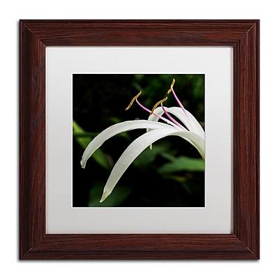 Trademark Fine Art Kurt Shaffer 'Graceful Lily' 11