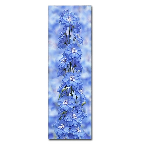 "Trademark Fine Art Cora Niele 'Blue Larkspur' 8"" x 24"" Canvas Stretched (190836317219)"