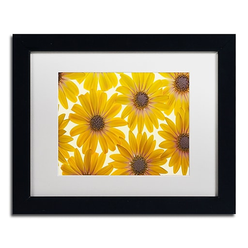 """Trademark Fine Art Cora Niele 'Yellow Cape Daisies' 11"""" x 14"""" Matted Framed (190836312306)"""