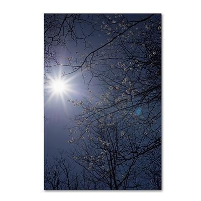 Trademark Fine Art Kurt Shaffer 'Springtime Sunshine' 12
