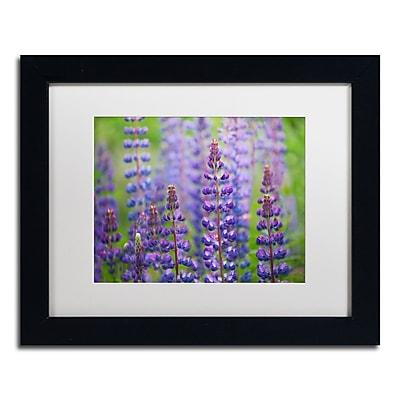 Trademark Fine Art Cora Niele 'Blue Lupine Flowers' 11