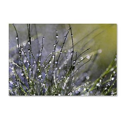 Trademark Fine Art Beata Czyzowska Young 'Spring Morning' 12