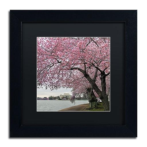 "Trademark Fine Art CATeyes 'Tidal Basin Blossoms' 11"" x 11"" Matted Framed (190836099269)"