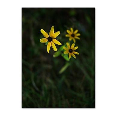 Trademark Fine Art Kurt Shaffer 'Brown-Eyed Susan' 14