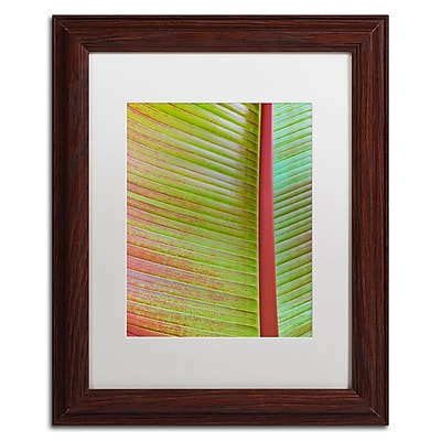 Trademark Fine Art Cora Niele 'Leaf Texture VI' 11