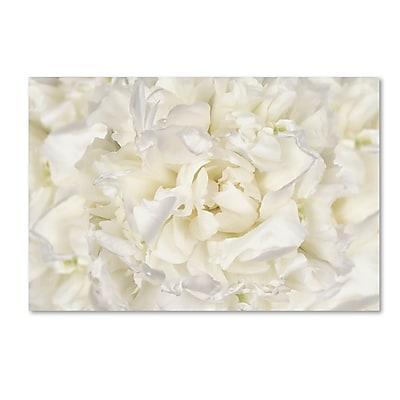 Trademark Fine Art Cora Niele 'White Peony Flower' 12
