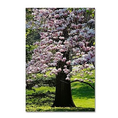 Trademark Fine Art Kurt Shaffer 'Spring Magnolia' 12