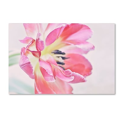 Trademark Fine Art Cora Niele 'Cerise Tulip' 12