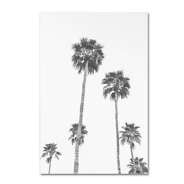 Trademark Fine Art Ariane Moshayedi 'Palms 6 BW' 12