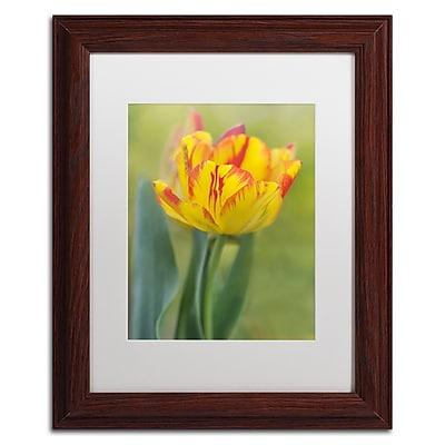 Trademark Fine Art Cora Niele 'Rembrandt Tulip' 11