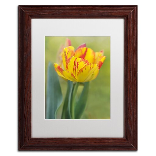 "Trademark Fine Art Cora Niele 'Rembrandt Tulip' 11"" x 14"" Matted Framed (190836249206)"