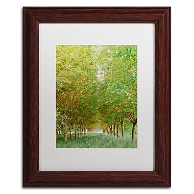 Trademark Fine Art Ariane Moshayedi 'Tree Tunnel' 11