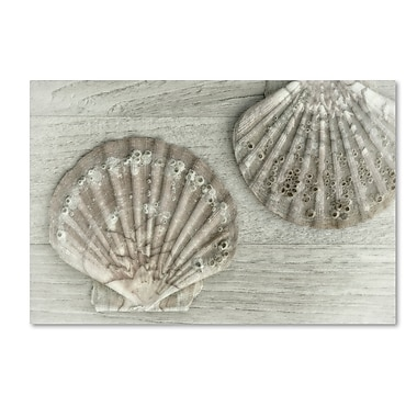 Trademark Fine Art Cora Niele 'Two King Scallop Shells' 12