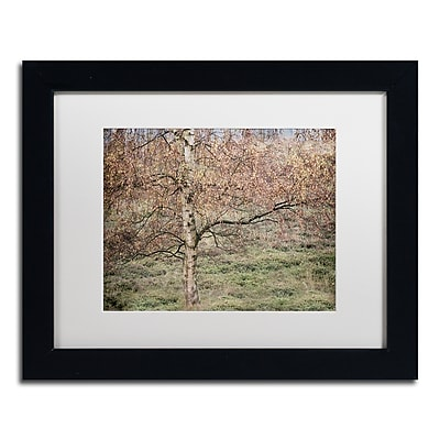 "Trademark Fine Art Cora Niele 'Birch' 11"" x 14"" Matted Framed (190836316083)"