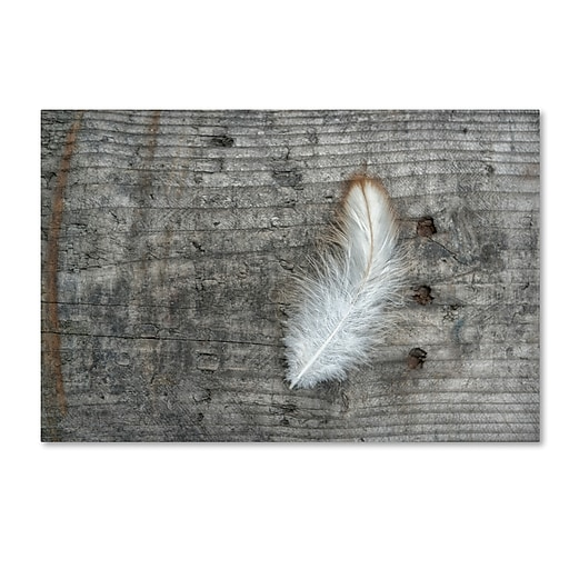 """Trademark Fine Art Cora Niele 'Feather on Rough Wood' 12"""" x 19"""" Canvas Stretched (190836255269)"""