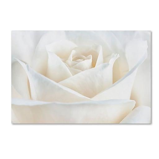 "Trademark Fine Art Cora Niele 'Pure White Rose' 16"" x 24"" Canvas Stretched (190836308699)"