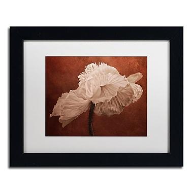 Trademark Fine Art Cora Niele 'White Poppy' 11