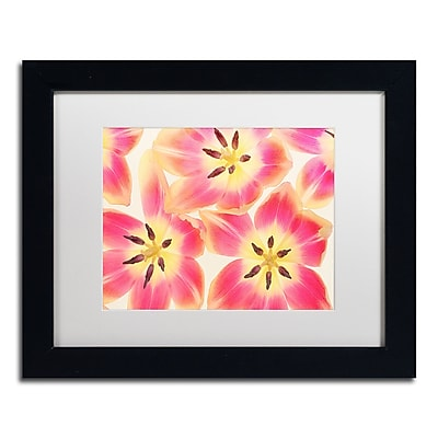 Trademark Fine Art Cora Niele 'Cerise and Yellow Tulips' 11
