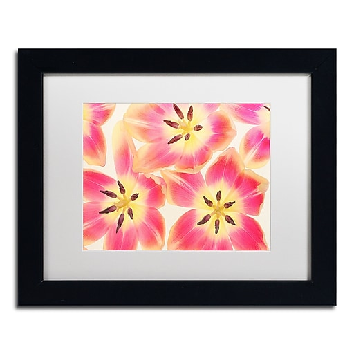 """Trademark Fine Art Cora Niele 'Cerise and Yellow Tulips' 11"""" x 14"""" Matted Framed (190836256648)"""