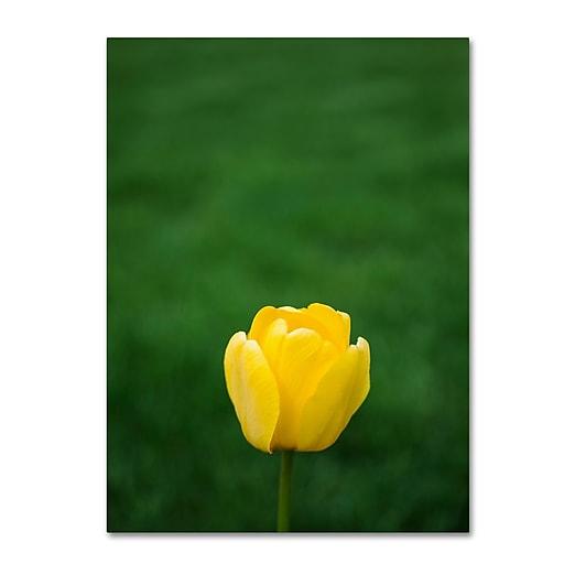 "Trademark Fine Art Kurt Shaffer 'A Lone Yellow Tulip' 14"" x 19"" Canvas Stretched (190836001750)"