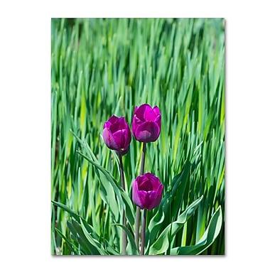 Trademark Fine Art Kurt Shaffer 'Healing Tulips' 14