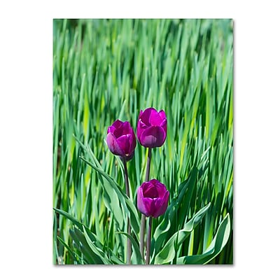 Trademark Fine Art Kurt Shaffer 'Healing Tulips' 14