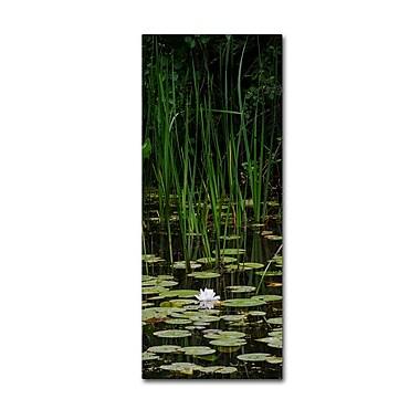 Trademark Fine Art Kurt Shaffer 'Marsh Lotus' 8