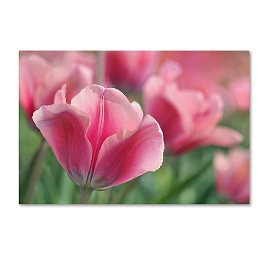 "Trademark Fine Art Cora Niele 'Tulip Mirella Pink' 12"" x 19"" Canvas Stretched (190836249800)"