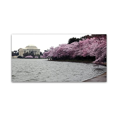 Trademark Fine Art CATeyes 'Basin Blossoms' 10