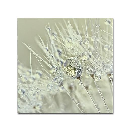 "Trademark Fine Art Cora Niele 'Dandelion Dew III' 18"" x 18"" Canvas Stretched (190836251636)"