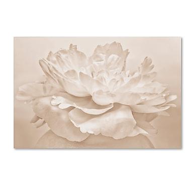 Trademark Fine Art Cora Niele 'White Peony' 12
