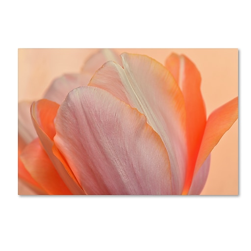 "Trademark Fine Art Cora Niele 'Orange Glowing Tulip' 12"" x 19"" Canvas Stretched (190836258482)"