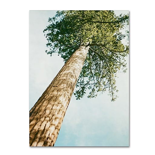 "Trademark Fine Art Ariane Moshayedi 'Giant Tree' 14"" x 19"" Canvas Stretched (190836268207)"