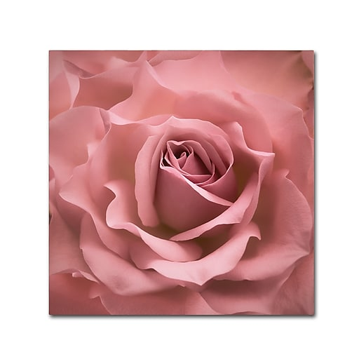 """Trademark Fine Art Cora Niele 'Misty Rose Pink Rose' 18"""" x 18"""" Canvas Stretched (190836258215)"""