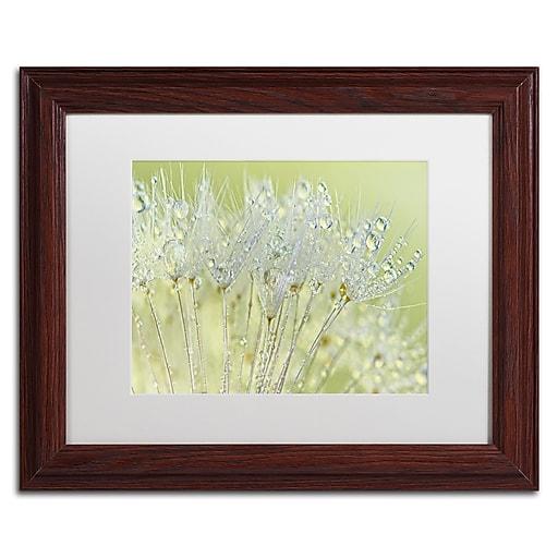 "Trademark Fine Art Cora Niele 'Dandelion Dew I' 11"" x 14"" Matted Framed (190836251445)"