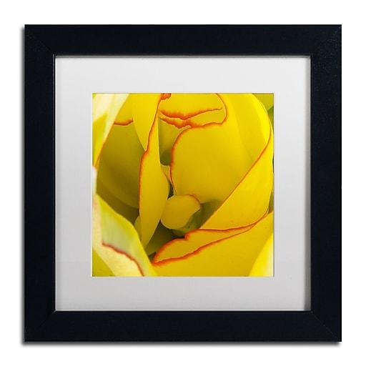 """Trademark Fine Art Kurt Shaffer 'Inside a Beautiful Tulip' 11"""" x 11"""" Matted Framed (190836000920)"""