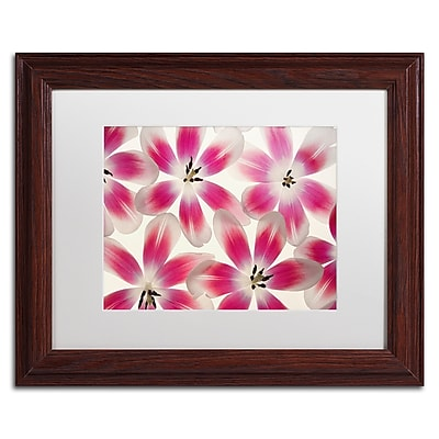 Trademark Fine Art Cora Niele 'Ruby Red and White Tulips' 11