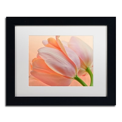 Trademark Fine Art Cora Niele 'Two Orange Tulips' 11