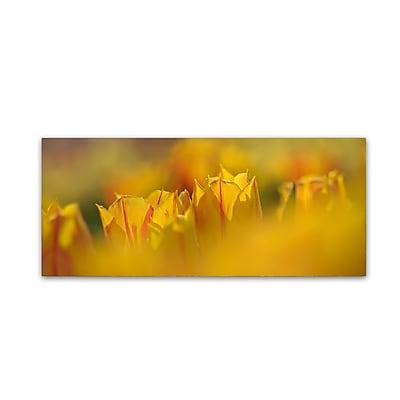 Trademark Fine Art Cora Niele 'Aurora Tulips' 10