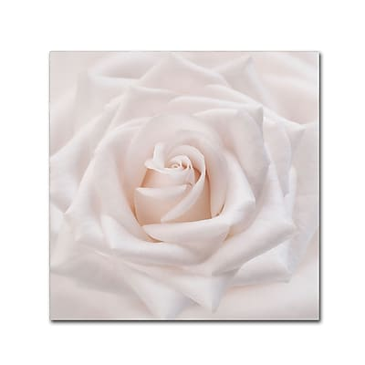 Trademark Fine Art Cora Niele 'Soft White Rose' 18