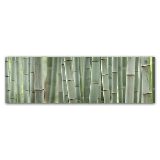 "Trademark Fine Art Cora Niele 'Grey Bamboo Scape' 6"" x 19"" Canvas Stretched (190836317486)"