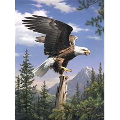Reeves 446601 Paint By Number Artists Collection 9 in. x 12 in. -Screaming Eagle (NMG66921) 2598126