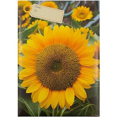 JAM Paper® Bubble Mailers, Large, 10.5 x 16, Sunflower Design, 6/pack (526SSDE337L)