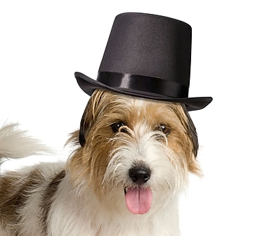Lillian Rose Top Hat for Dogs (RA273)