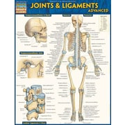 BarCharts Joints and ligaments Advanced (BARCH466)