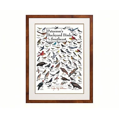 Steven M. lewers and Associates Peterson's Backyard Birds of Southeast Poster (GC19789)