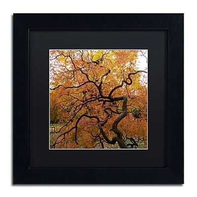 Trademark Fine Art Kurt Shaffer 'October Japanese Maple' 11