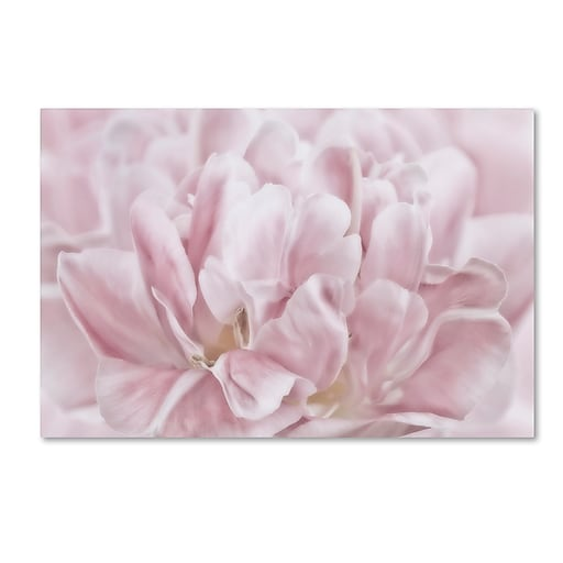 """Trademark Fine Art Cora Niele 'Double Pink Tulip' 12"""" x 19"""" Canvas Stretched (190836257508)"""